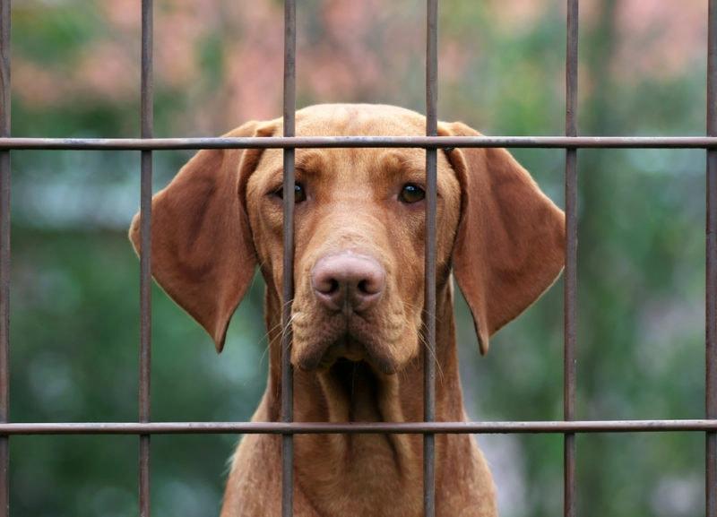 best escape proof dog crates