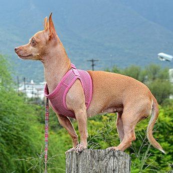 long-living-dogs