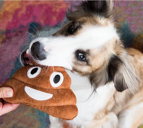 poop squeaky toy