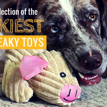 wackiest dog squeaky toys
