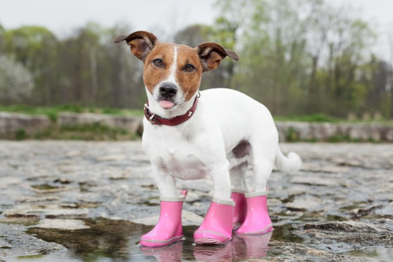 best-dog-booties