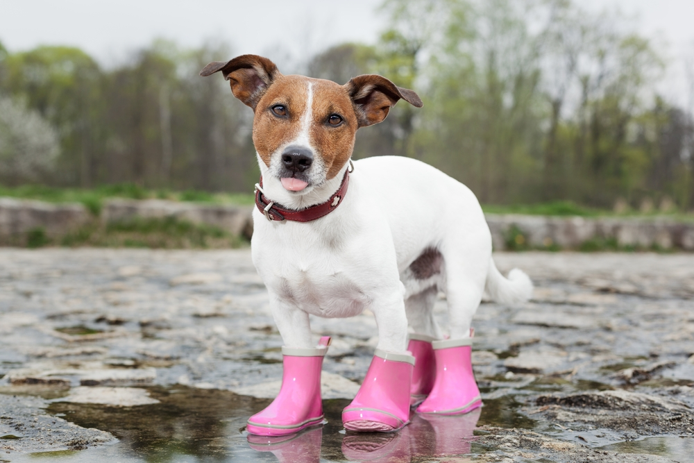 5 Best Booties For Dogs Protecting Your Pup S Paws