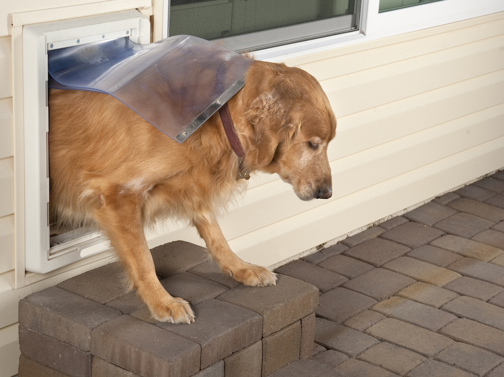 10 Best Dog Doors For Letting Fido In And Out Of The House