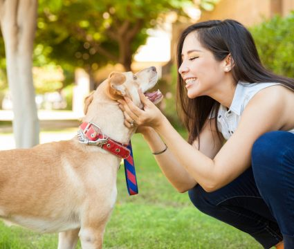 best jobs for dog lovers
