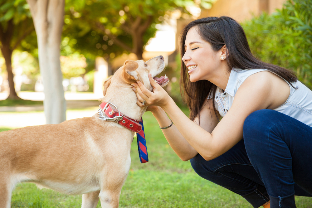 6 Best Jobs For Dog Lovers Make A Living Off Of Loving