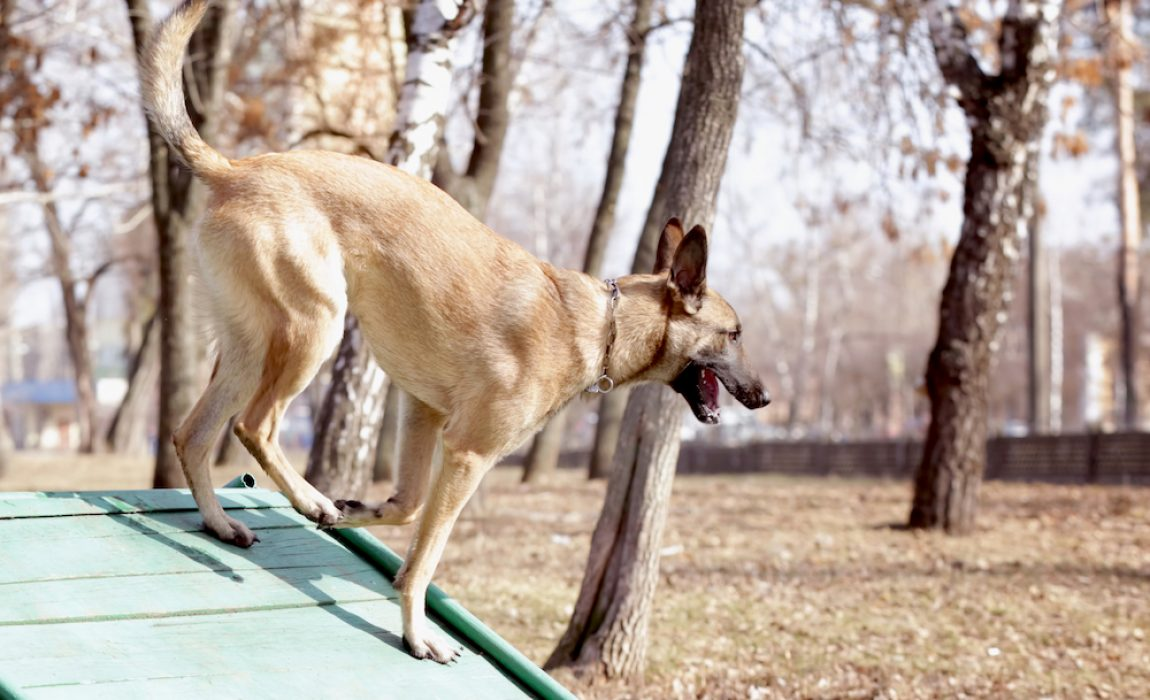 Diy Dog Ramp How To Build A Ramp For Your Dog 7 Designs