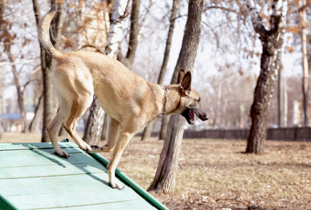 Diy dog ramp how to make a ramp for your dog 7 different designs solutioingenieria Image collections