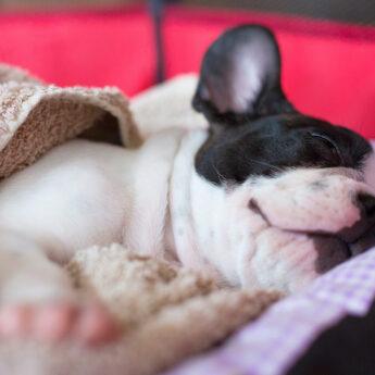 dog-canopy-beds