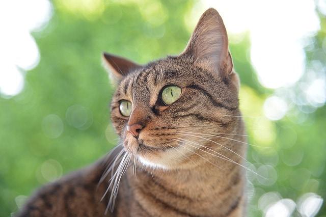dog catnip