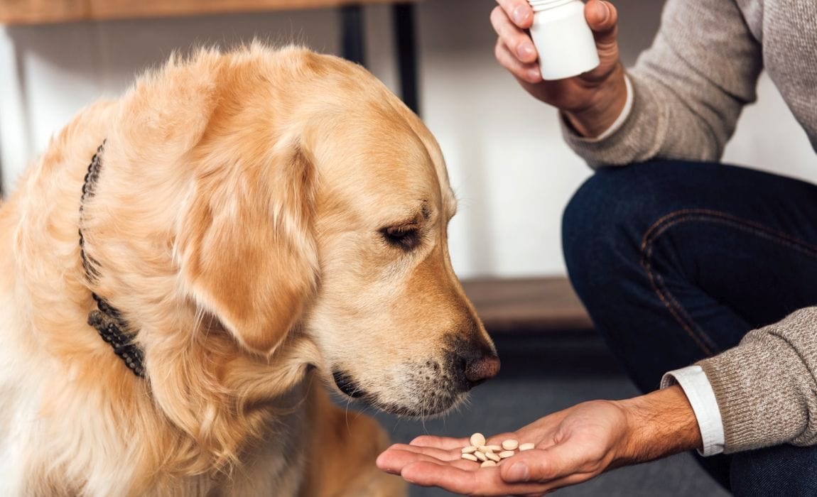 How to give an angry dog medicine