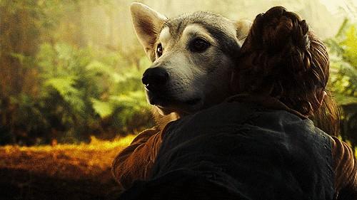 arya direwolf