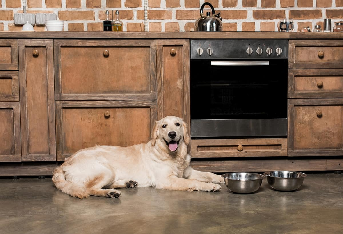 7 Best Automatic Dog Feeders 2019 Reviews Keeping Fido
