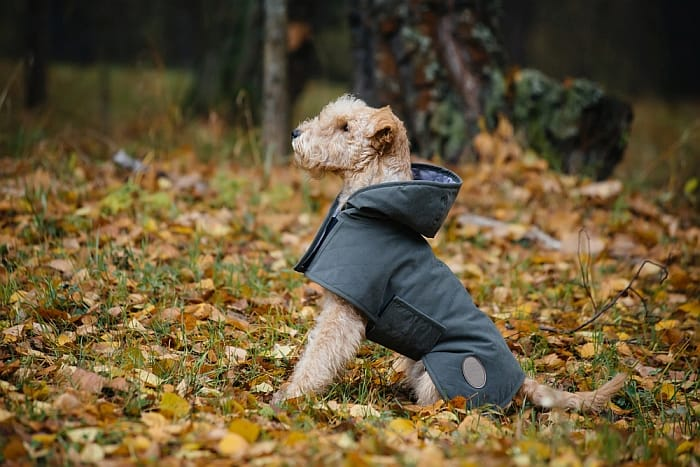 best-dog-raincoat
