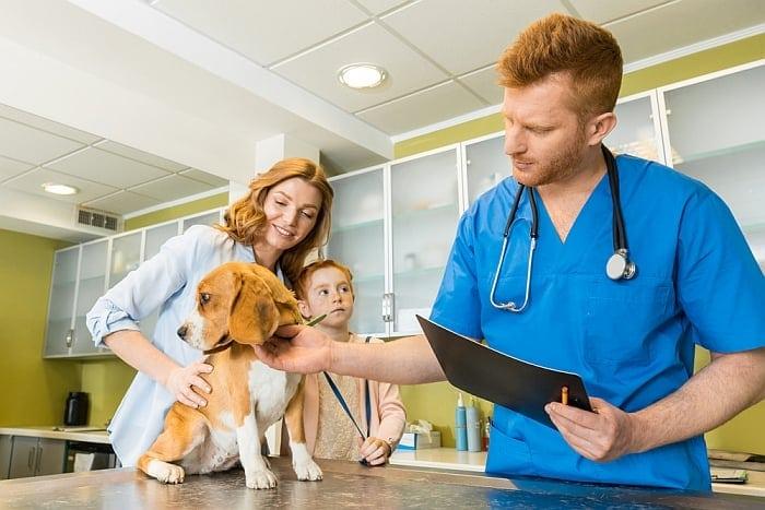 cephalexin-medication-for-dogs