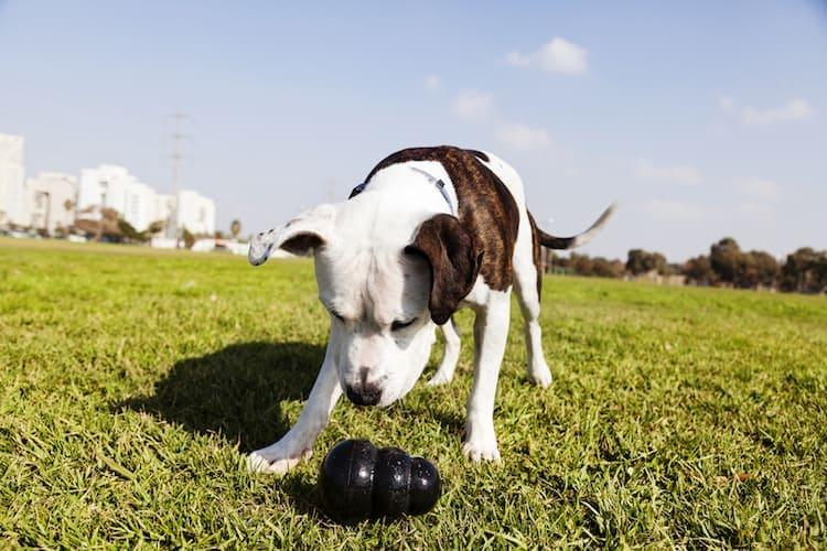 chew toys for pitbulls