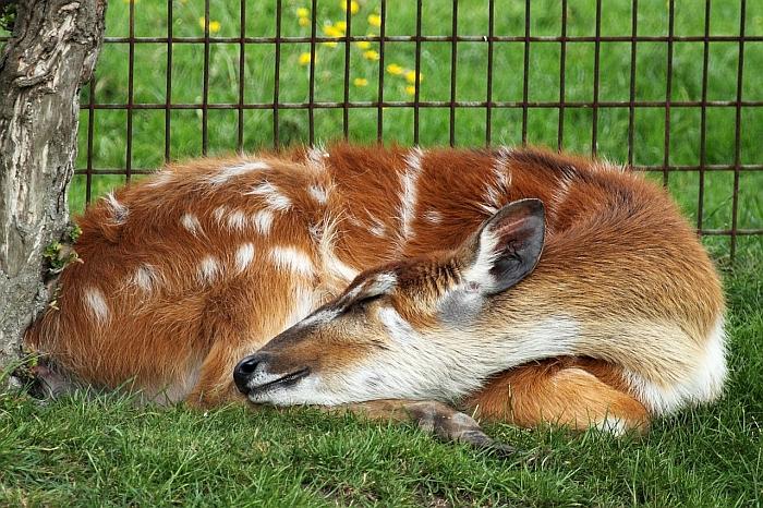 curled-sleeping-dog