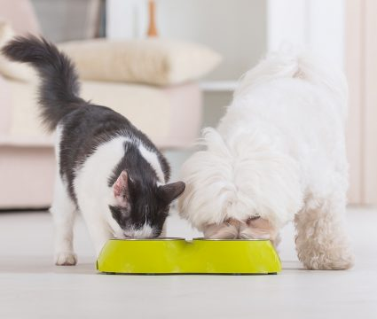 dog-proof-cat-feeder