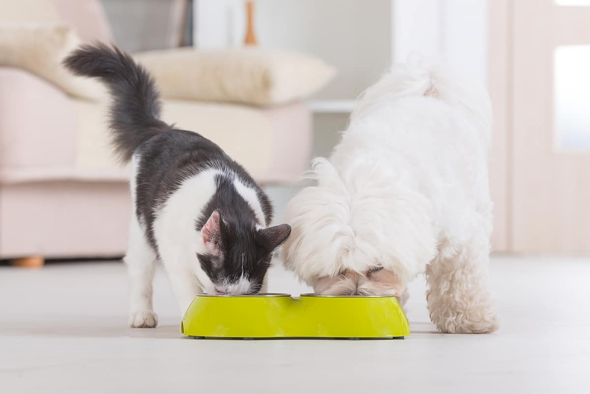 4 Dog Proof Cat Feeders To Protect Your Feline S Food