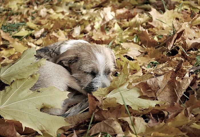 dog-sleeping-posture