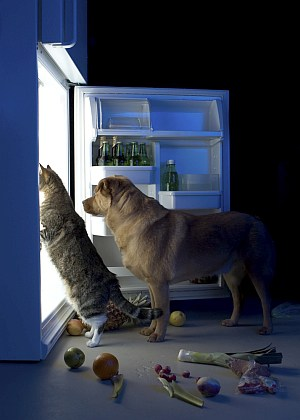 4 Dog Proof Cat Feeders To Protect Your Feline S Food From