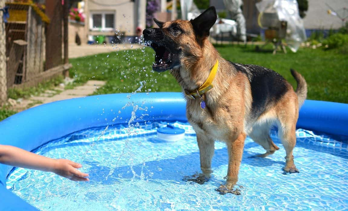 5 Best Dog Pools A Great Way To Let Spot Go For A Swim