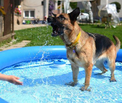 good-dog-pool