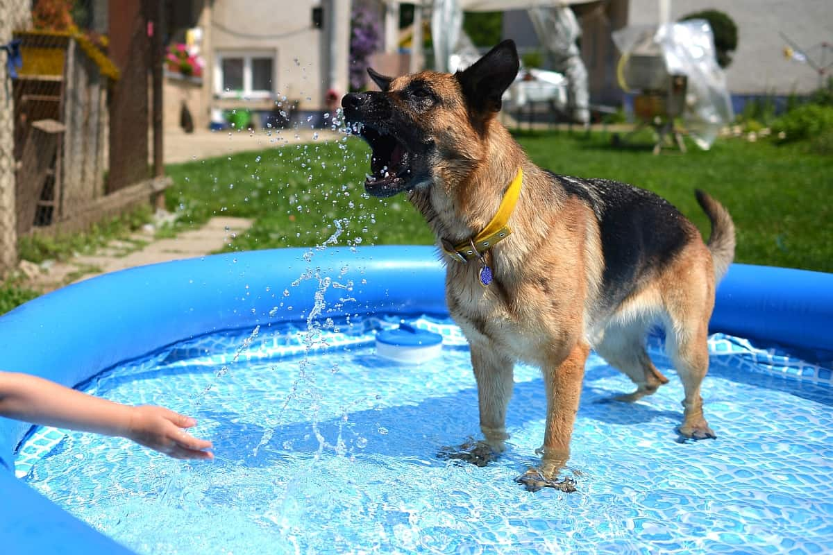 Pool Care Tips Dog Care Tips Archives K9 Of Mine