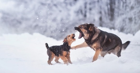 How to Break Up a Dog Fight: 7 Techniques to Avoid Getting Bitten!