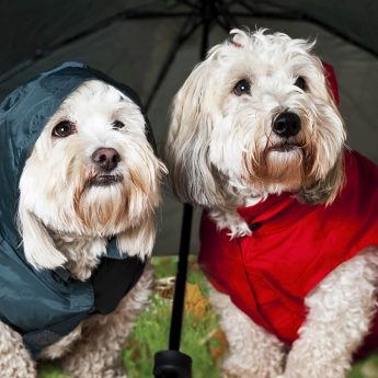 raincoats-for-dogs