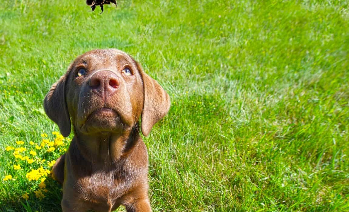 Sensational Help My Dog Ate A Bee What Should I Do Now Uwap Interior Chair Design Uwaporg