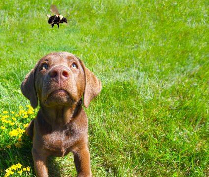 dog-ate-bee