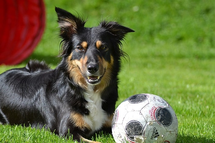 dog-friendly-soccer-ball