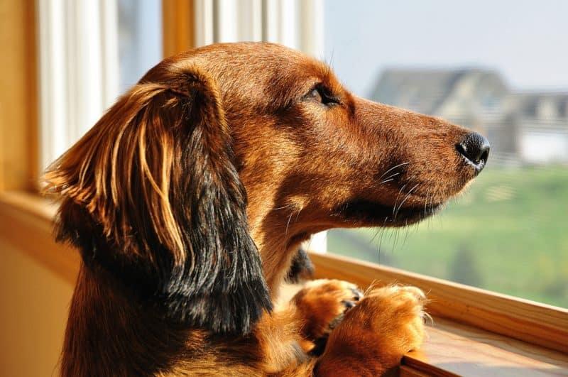 dog-proof-blinds