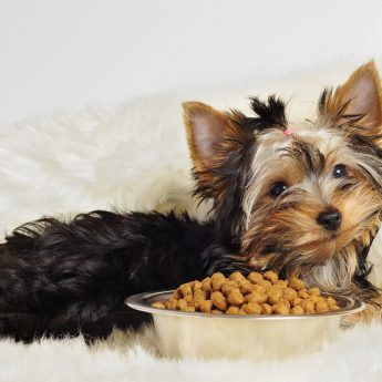 food-for-toy-breeds