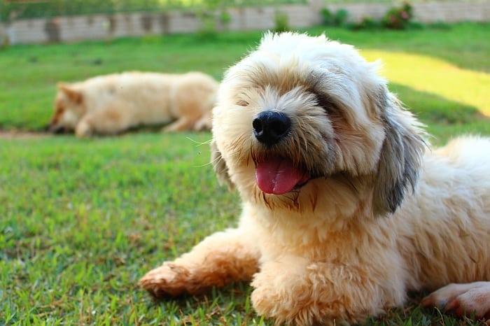 toy-breed-dog-food