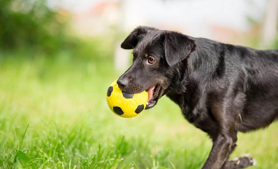 soccer-ball-for-dogs
