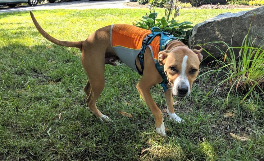dog-cooling-vest