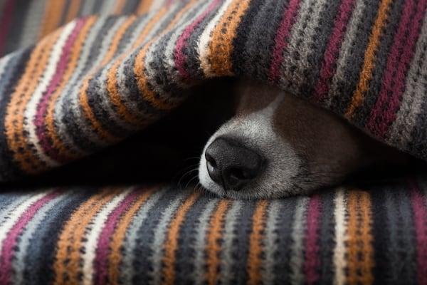 dog headache