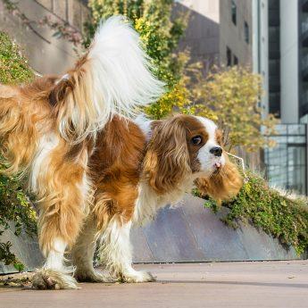 dog-litter-box