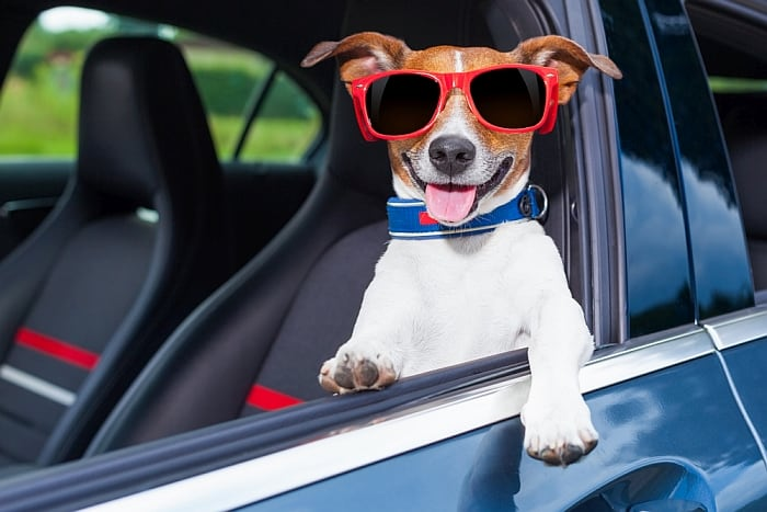 3f1f981efb2 6 Best Dog Sunglasses [2019 Reviews]: Keep Your Pup Stylin' and Safe!