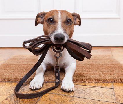 dog-doorbell