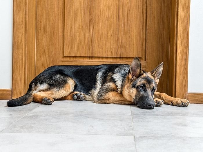 5 Best Dog Doorbells Theyll Tell When Theyve Gotta Tinkle