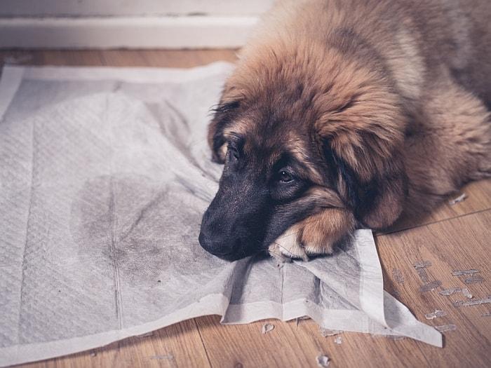 Best Dog Litter Boxes Indoor Pooch Potty Options - Indoor dog bathroom solutions