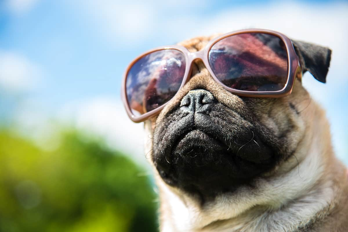 Sunglasses-for-dogs