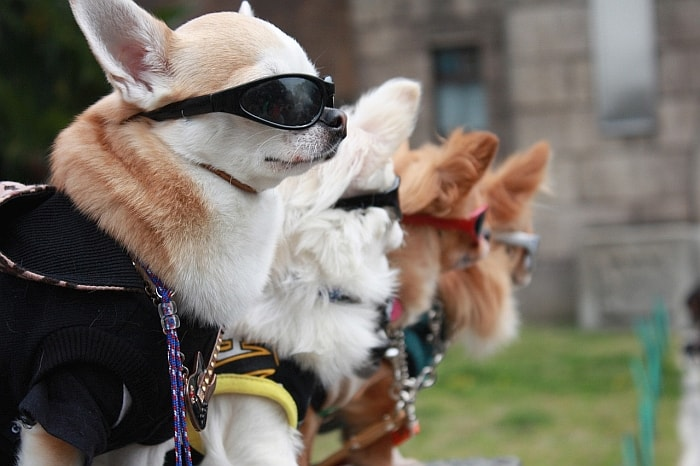 sunglasses-for-your-dog