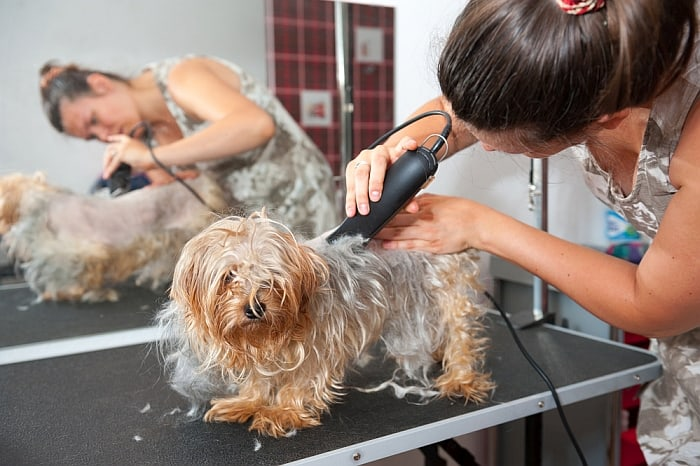 tipping-your-groomer