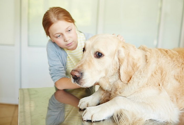 Permalink to Best Medication For Anxious Dogs