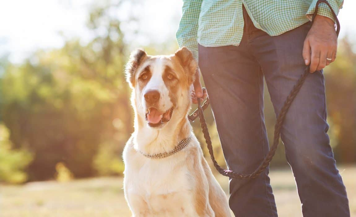 Rover vs Wag: Which Dog Walking App Leads the Pack?
