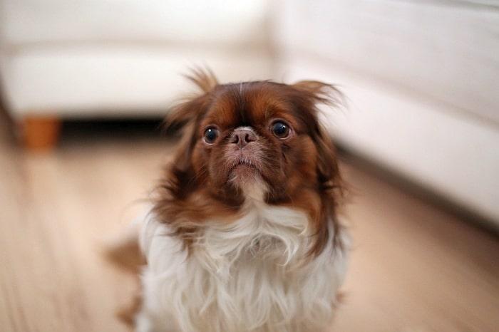 dog-anxiety-medication