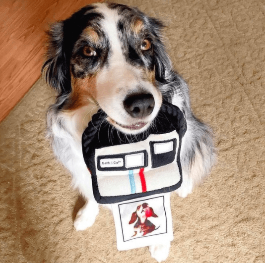 dog polaroid camera
